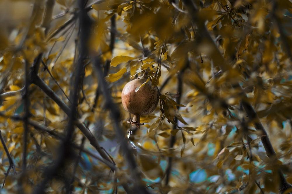 brown fruit on tree branch during daytime