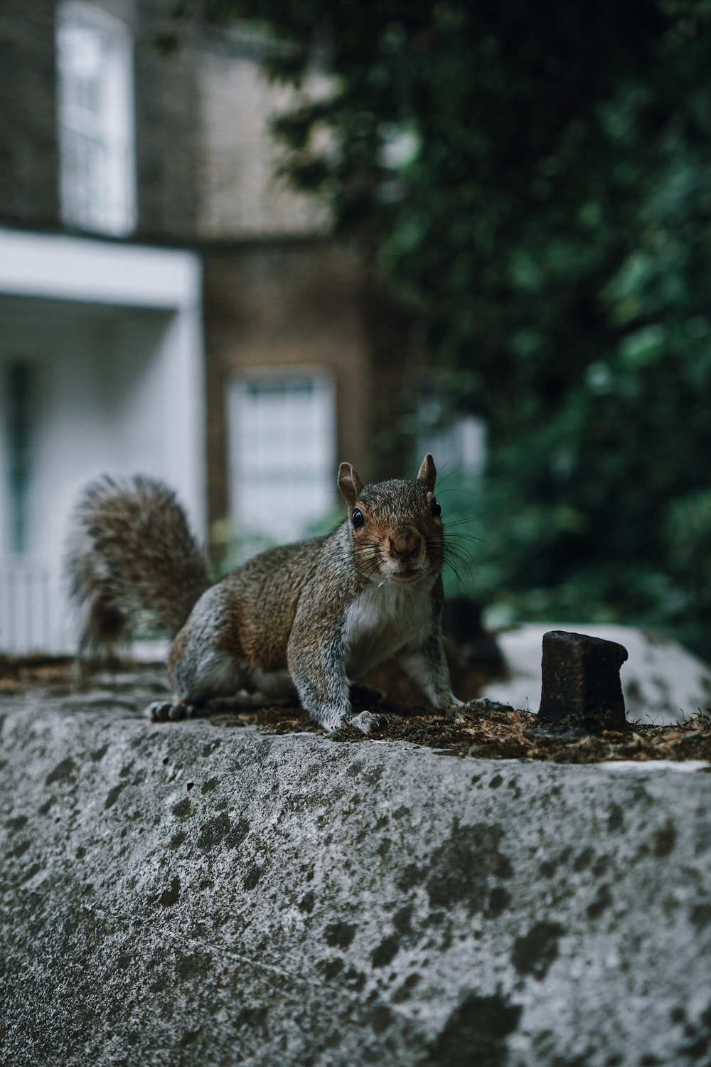brown squirrel on black concrete fence during daytime