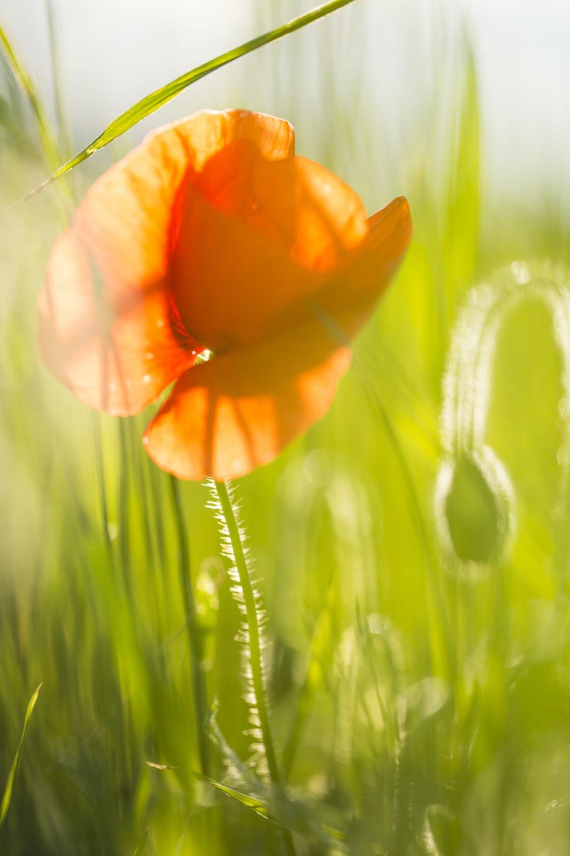 orange flower in green grass