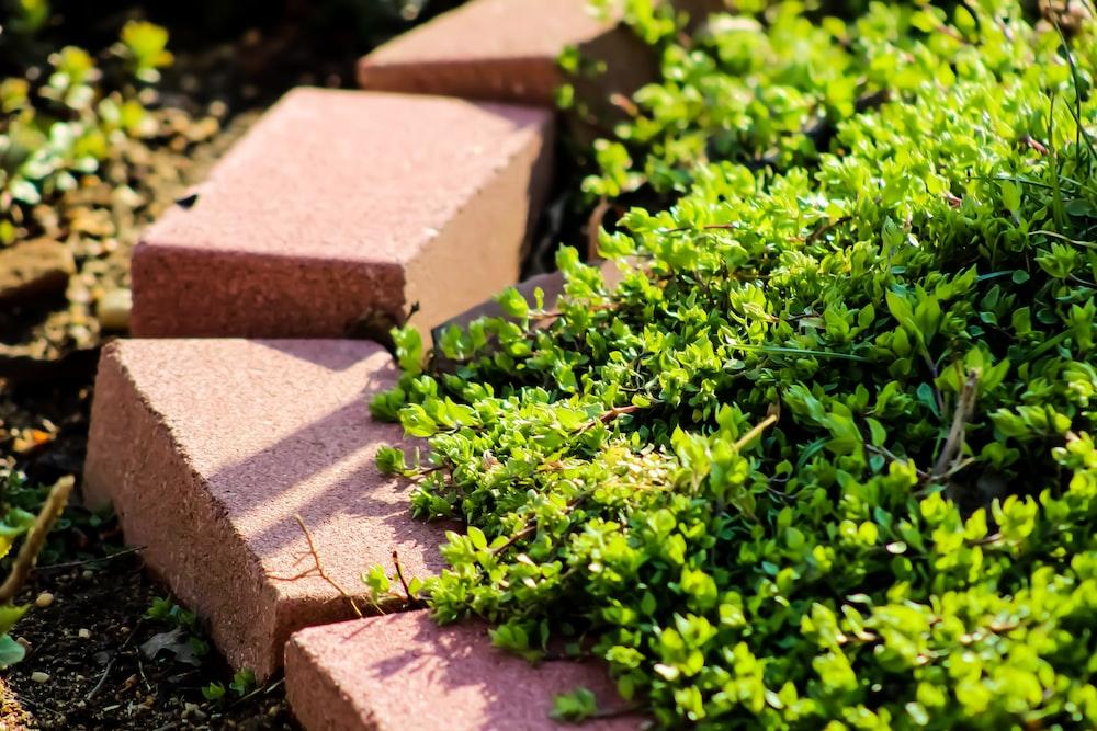 green plant on brown brick