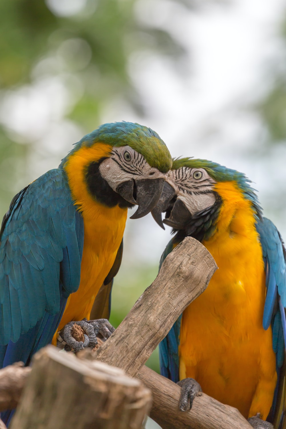 yellow green and blue parrot