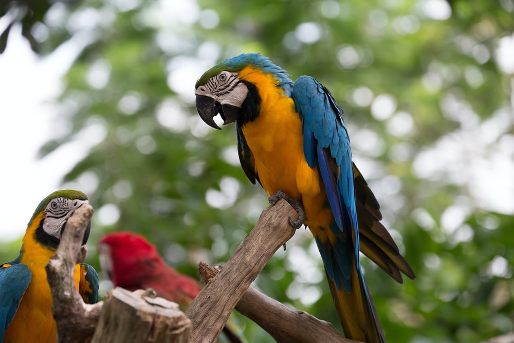 blue yellow and green parrot on brown tree branch