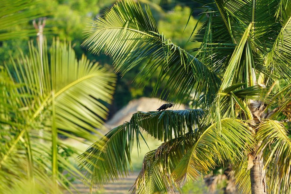 black bird flying over green palm tree during daytime