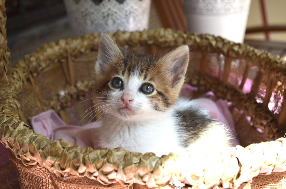 white and brown cat on brown wicker basket
