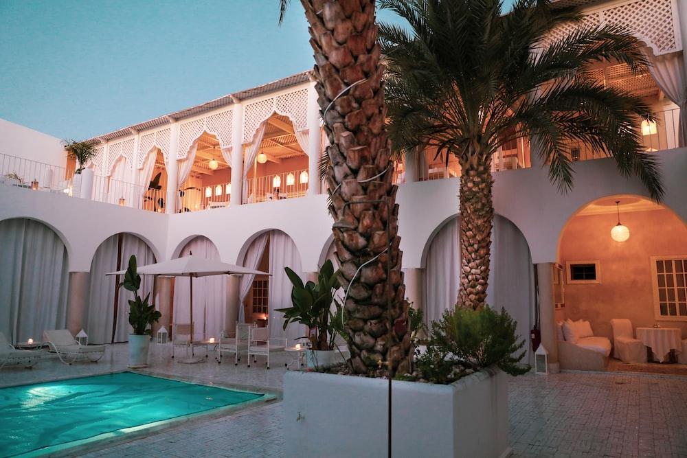palm tree near swimming pool