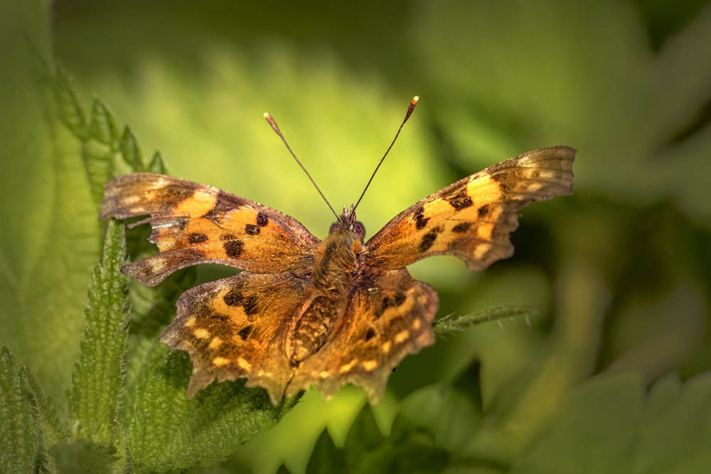 brown and black butterfly perched on green leaf in close up photography during daytime