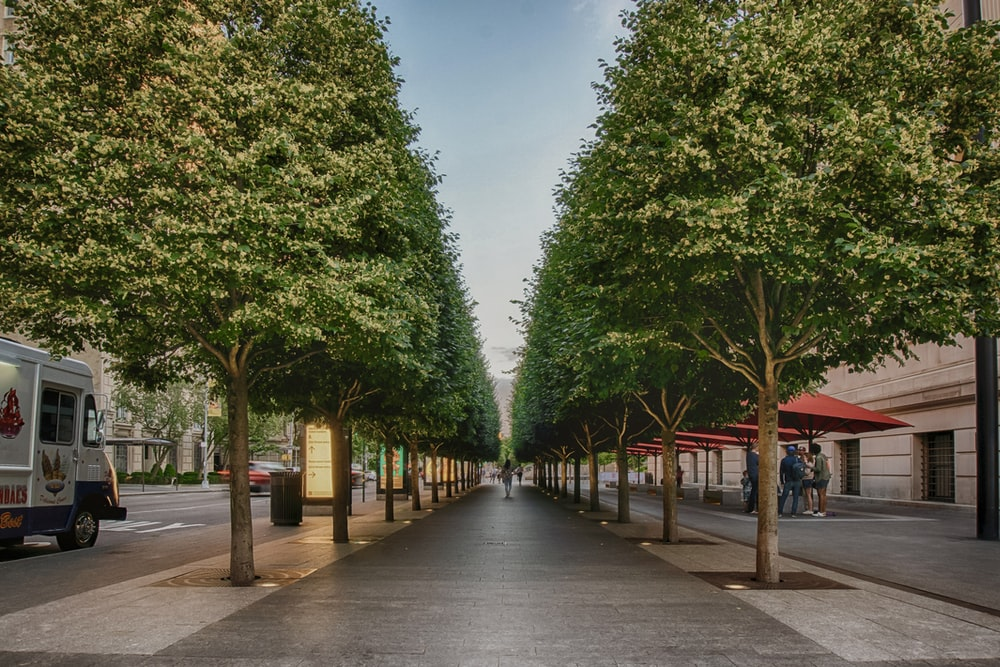 green trees on gray concrete pathway during daytime