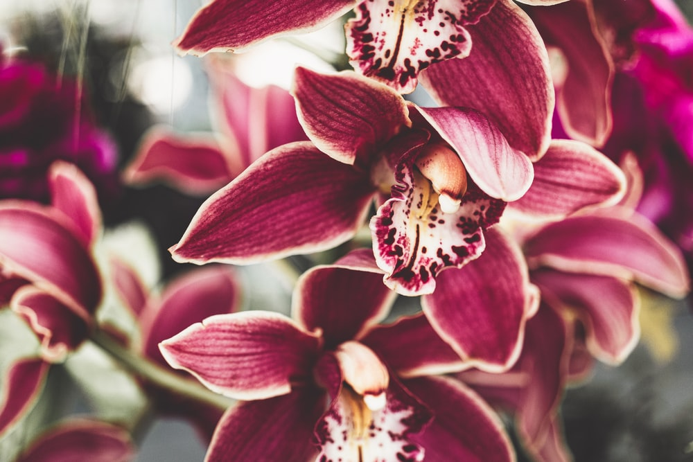 red and white moth orchids in bloom during daytime