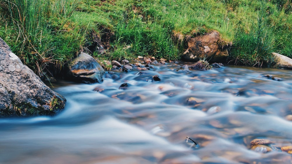 green grass and brown rocks on river