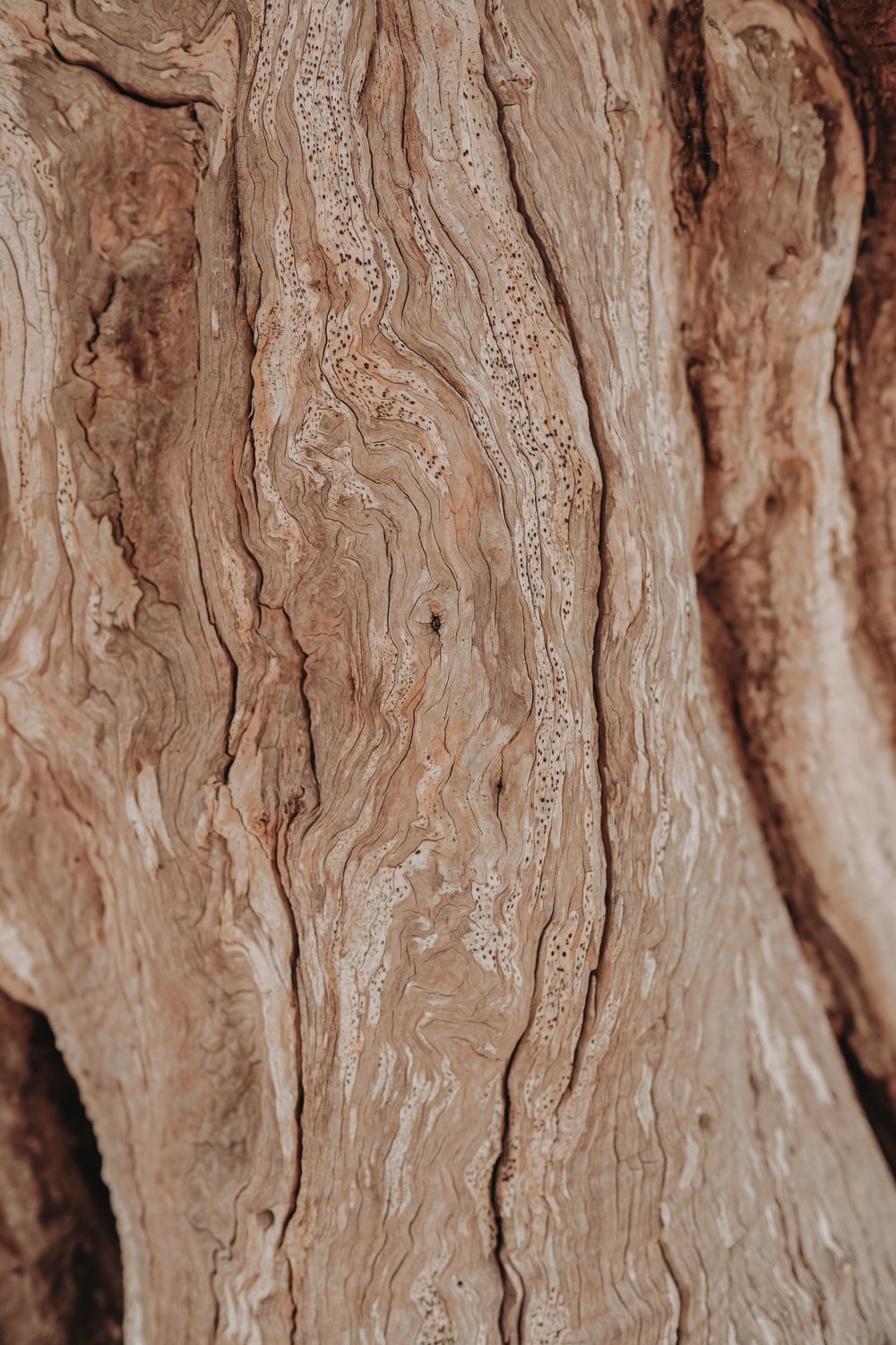 brown wood log in close up photography