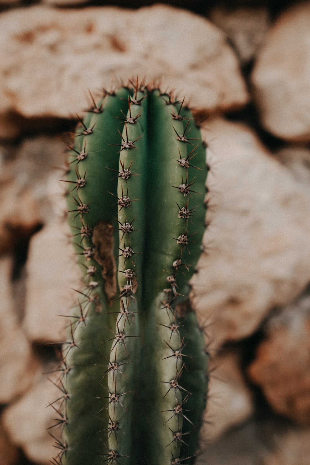 green cactus plant on brown rock