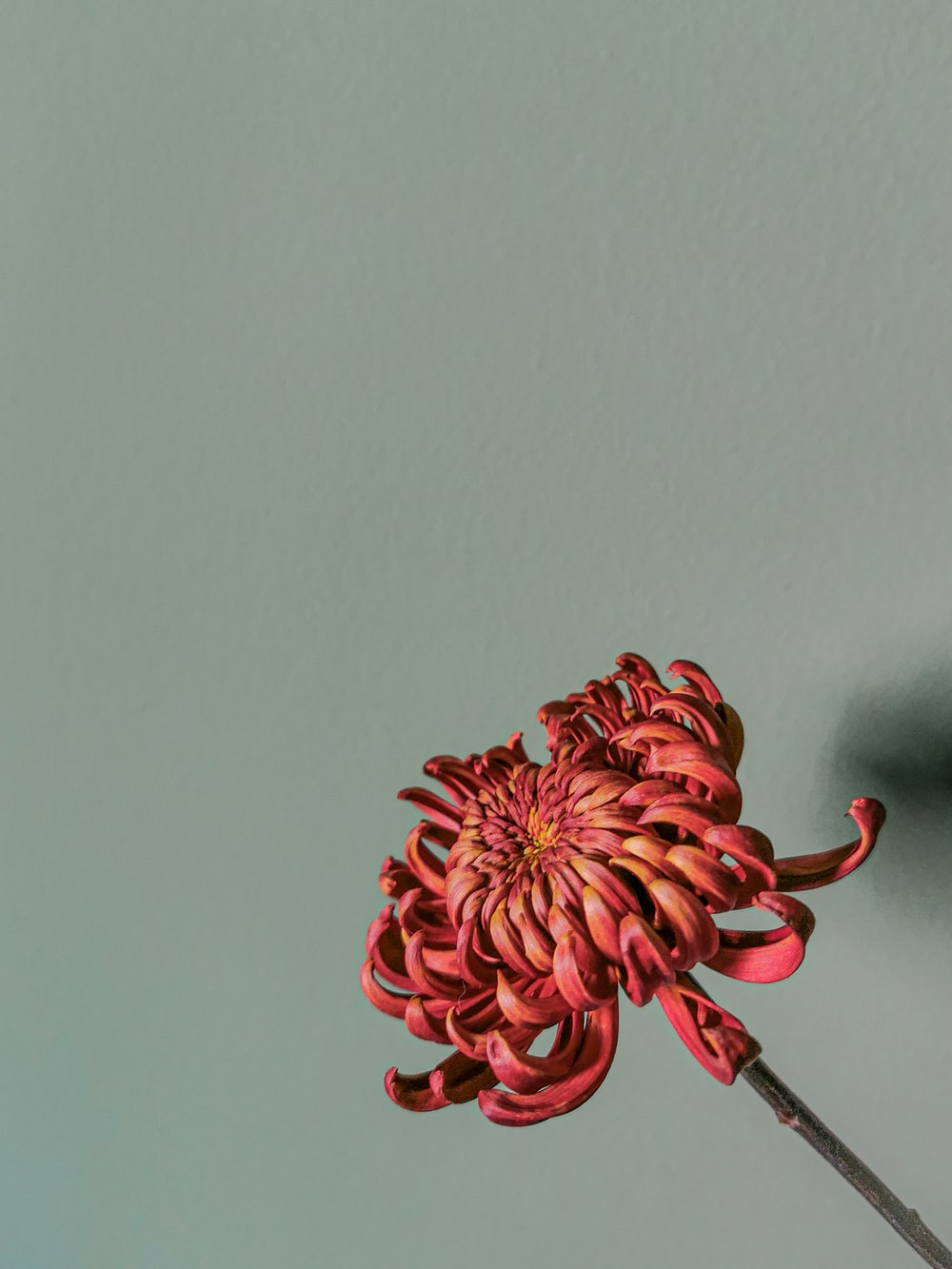 red flower on gray surface
