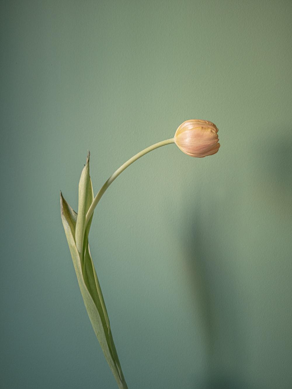 brown flower bud in tilt shift lens