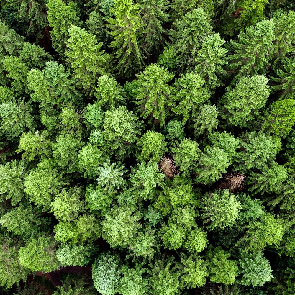 green fern plant during daytime