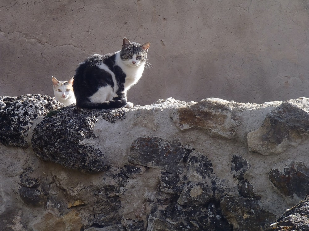 white and black cat on gray rock