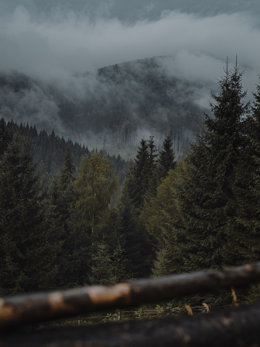 green pine trees on mountain under white clouds