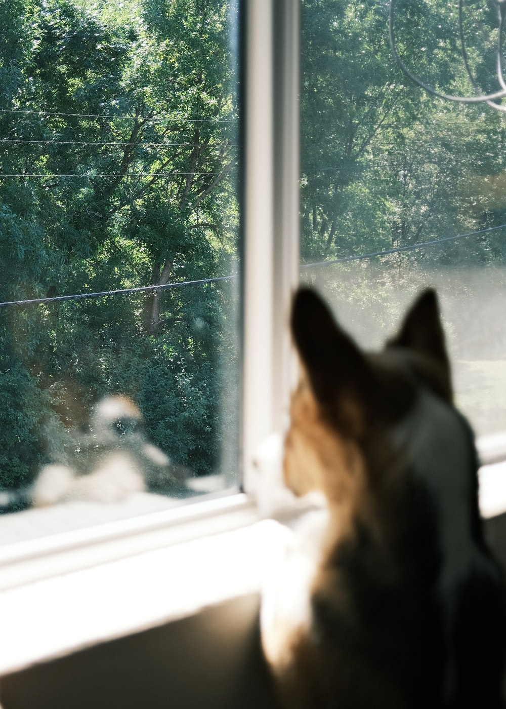 black and tan short coat medium sized dog sitting on window