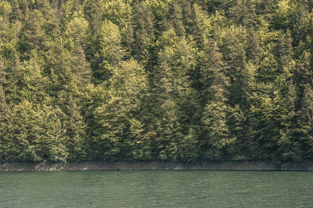 green and yellow trees beside body of water during daytime