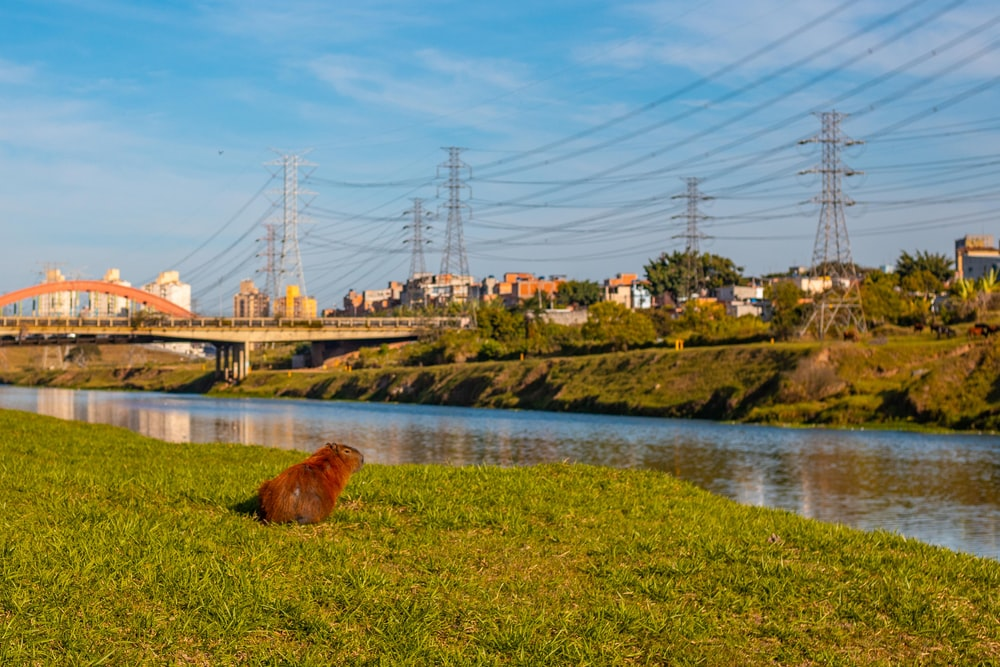 brown long coated dog on green grass near body of water during daytime