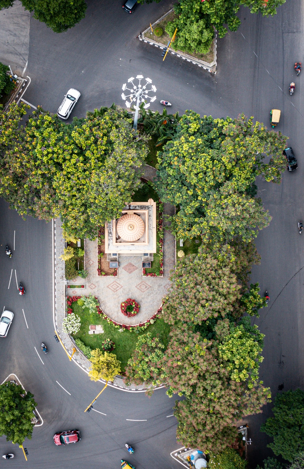 aerial view of green trees and plants