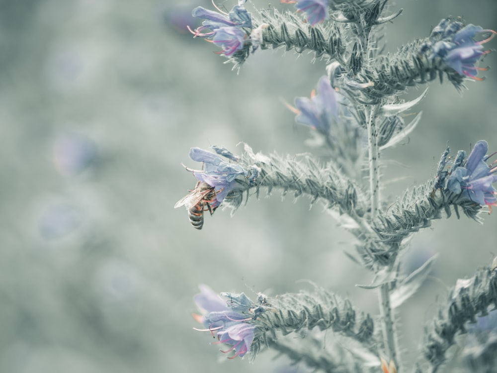 bee on purple flower during daytime