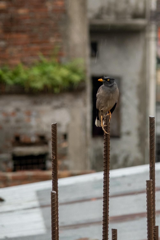 black and gray bird on brown metal bar during daytime