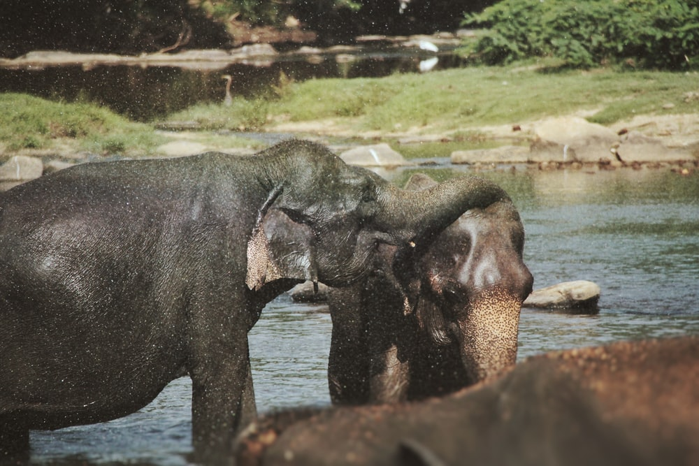 black elephant on body of water during daytime