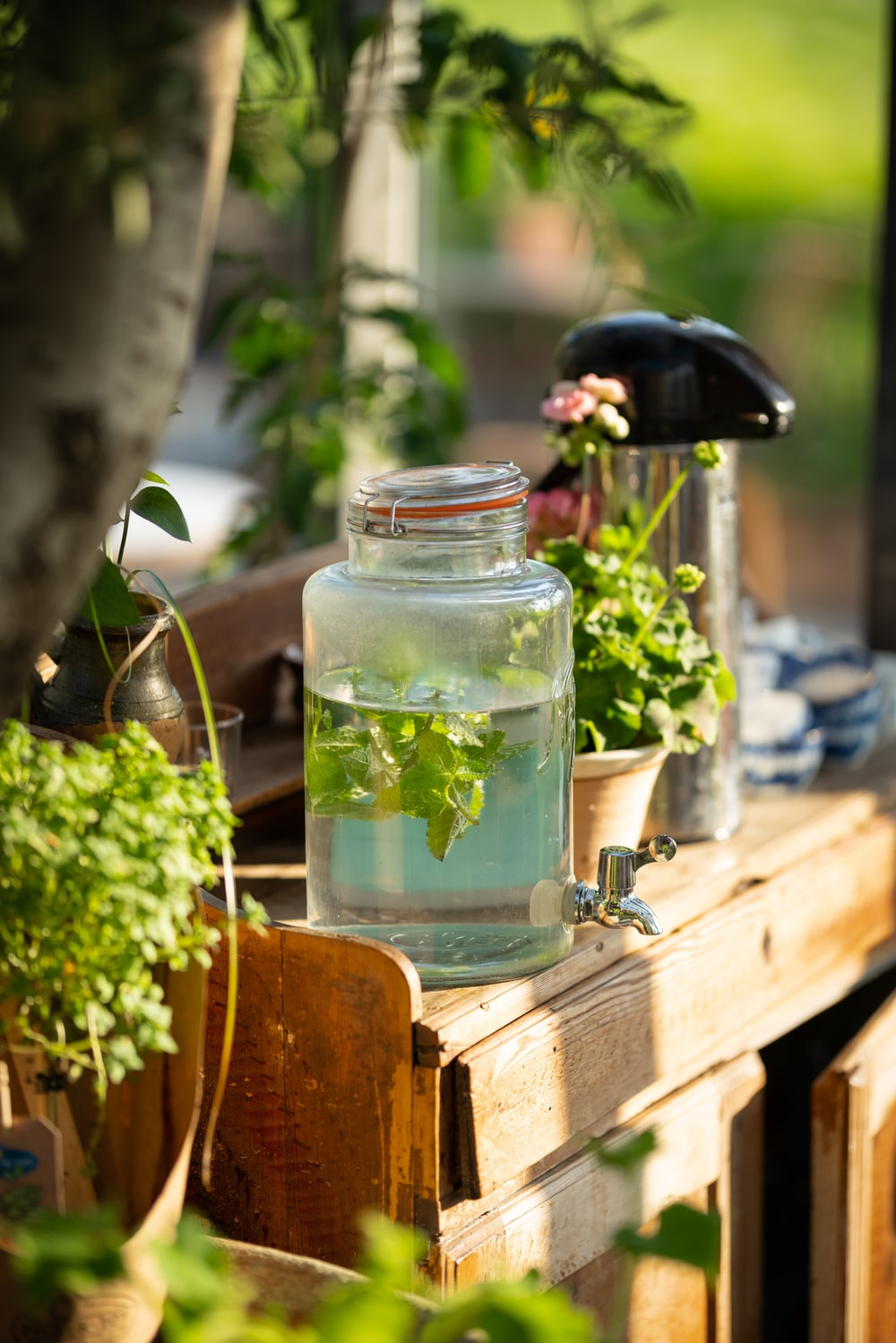 clear glass jar with green leaves