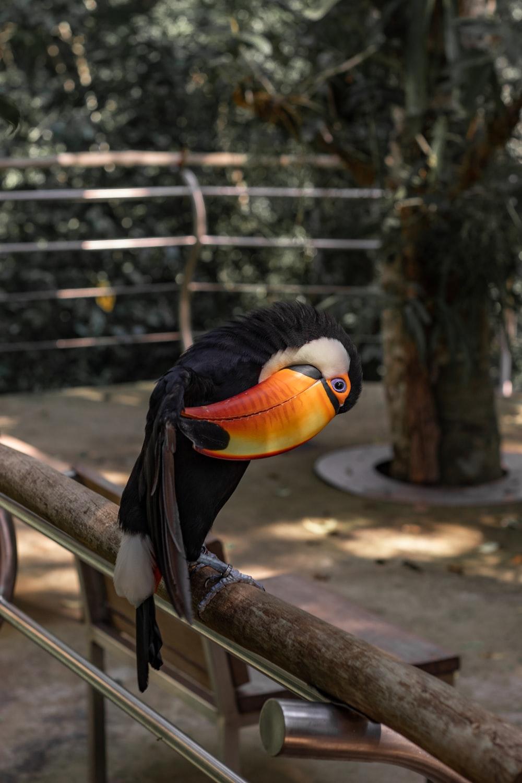 black white and orange bird on brown wooden fence during daytime
