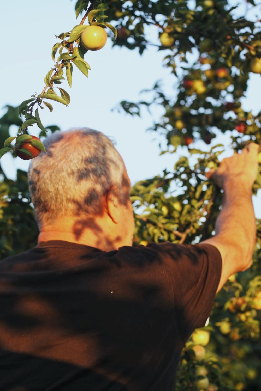 man in black shirt holding red fruit during daytime