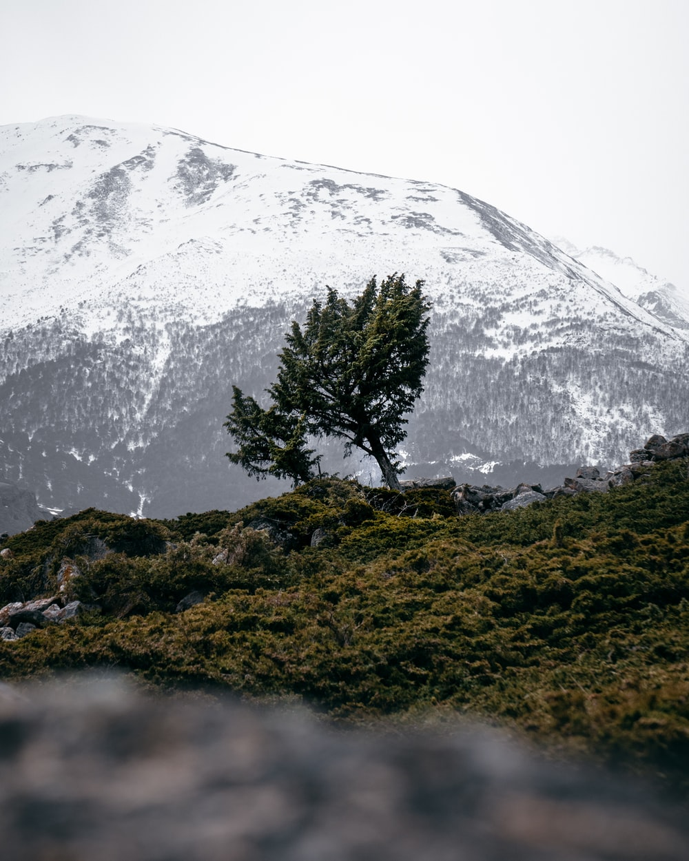 green tree on green grass field near snow covered mountain during daytime