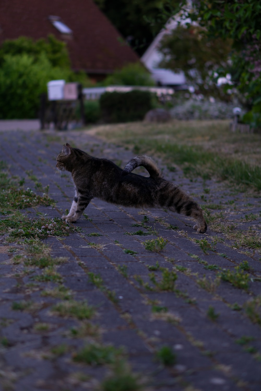 brown tabby cat walking on gray concrete pavement during daytime