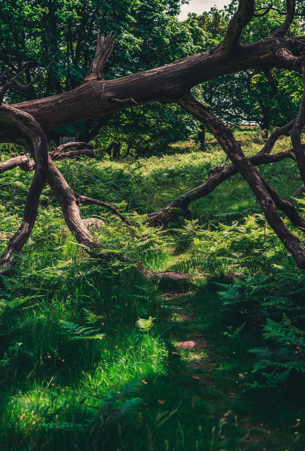 brown tree trunk surrounded by green plants