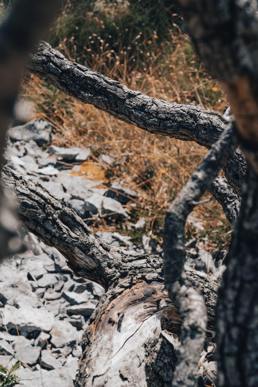 brown tree trunk on white rocky ground