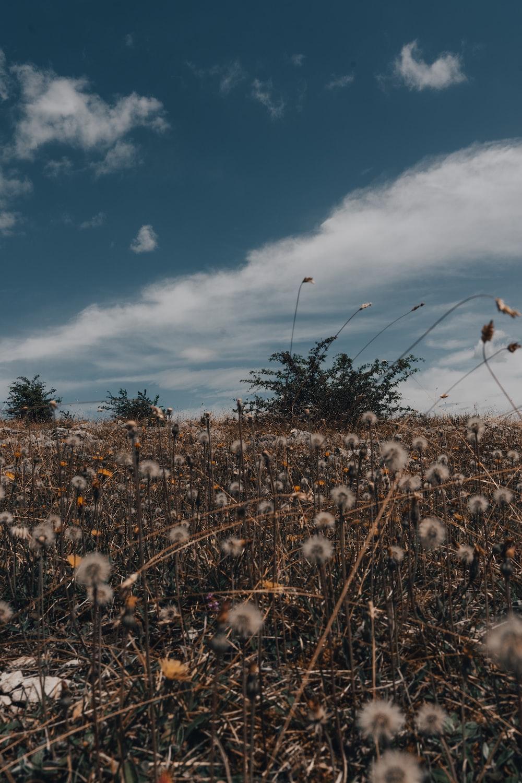 white flowers under blue sky during daytime