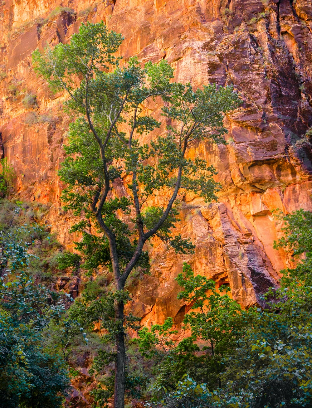 green trees on brown rock mountain during daytime