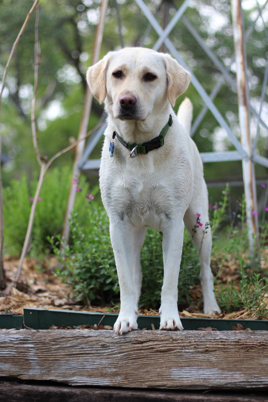 white short coated dog on brown soil