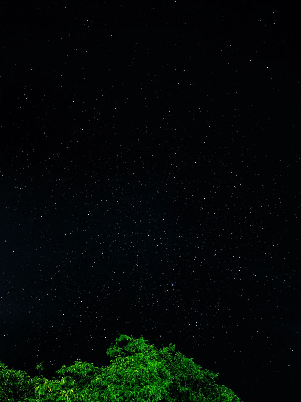 green trees under black sky during night time