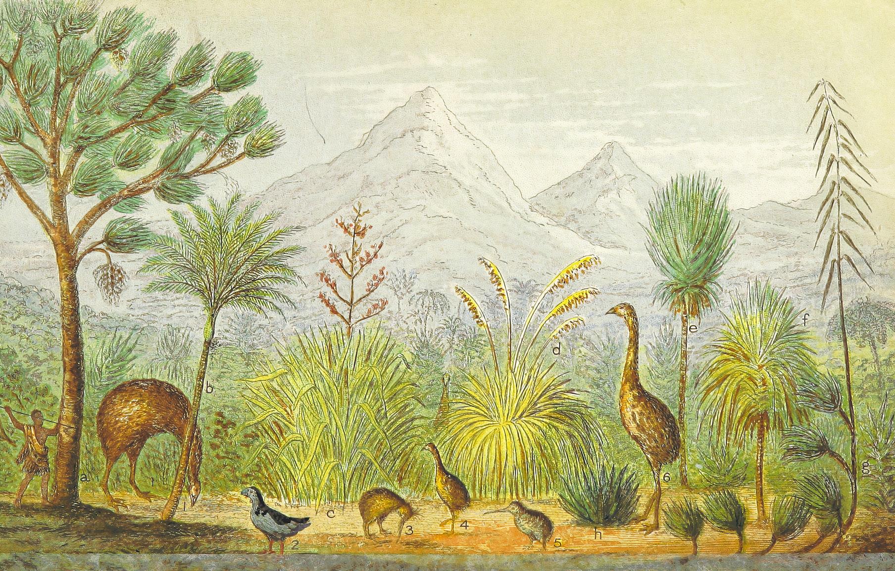 Birds - British Library