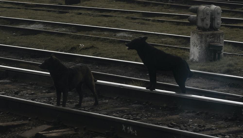 black short coated medium sized dog on brown wooden fence during daytime