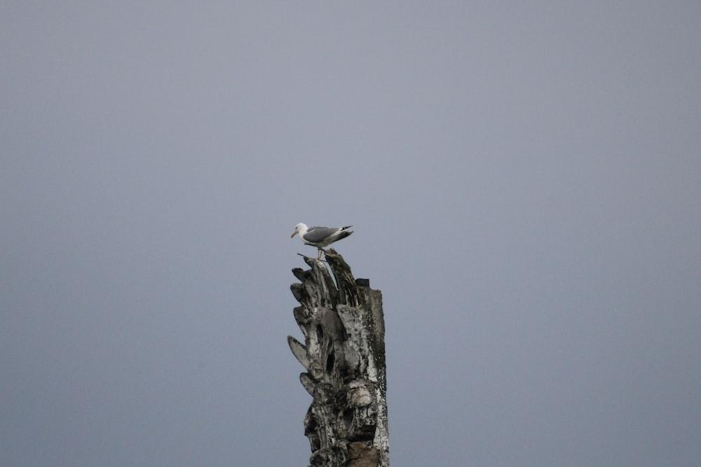 white bird on gray concrete post