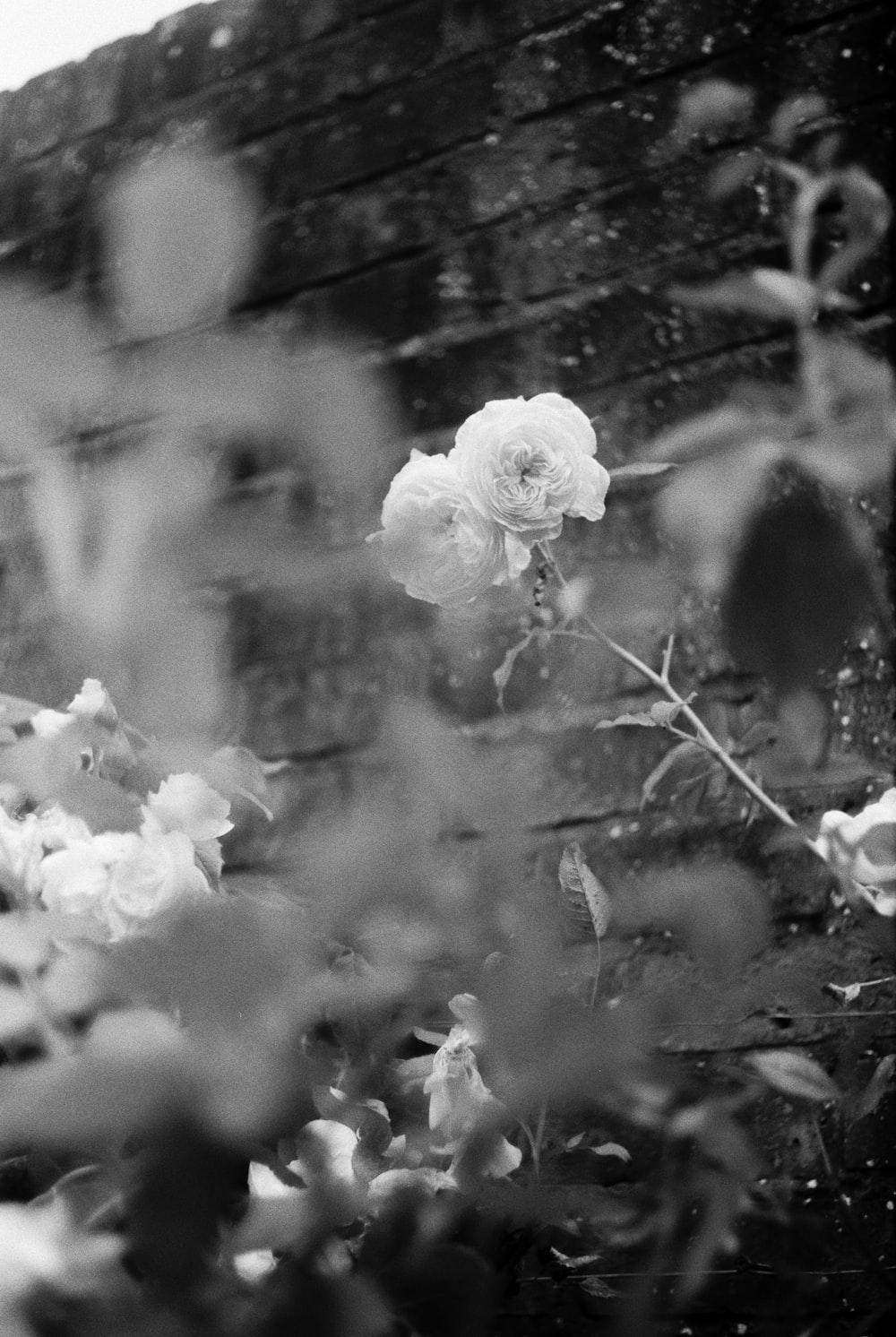 greyscale photo of white flower