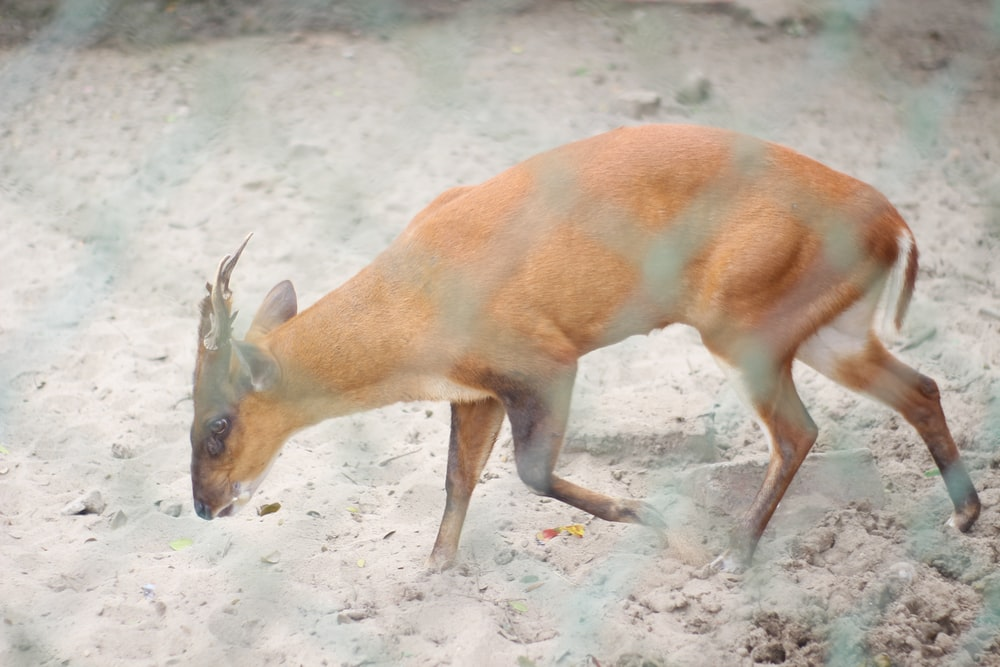 brown deer on white sand during daytime