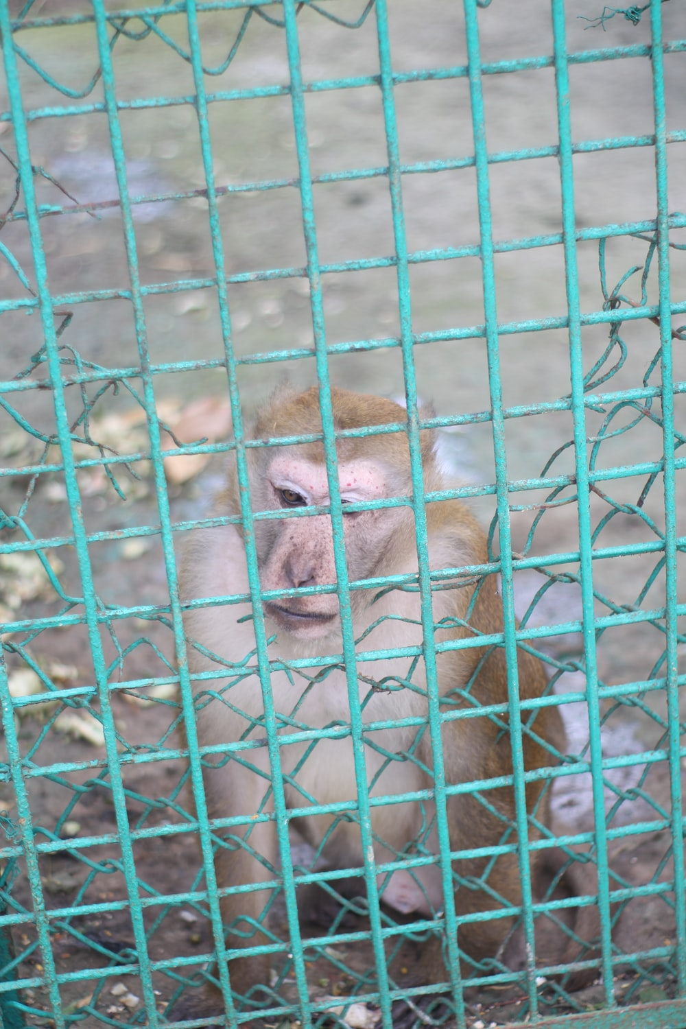 monkey in cage during daytime
