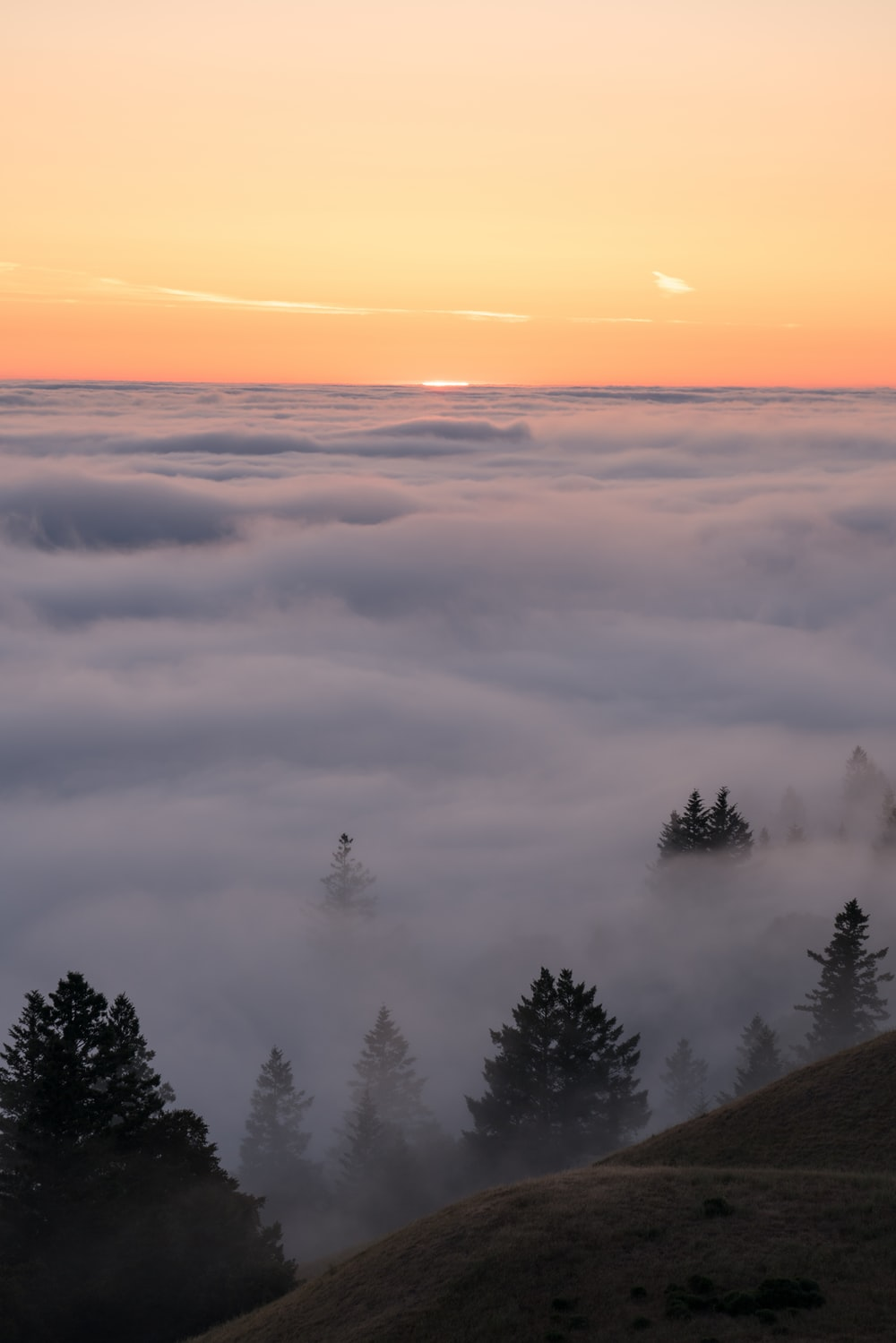 green trees covered by fog during daytime