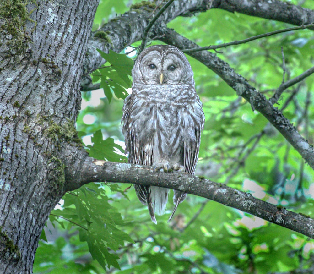 owl perched on tree branch during daytime