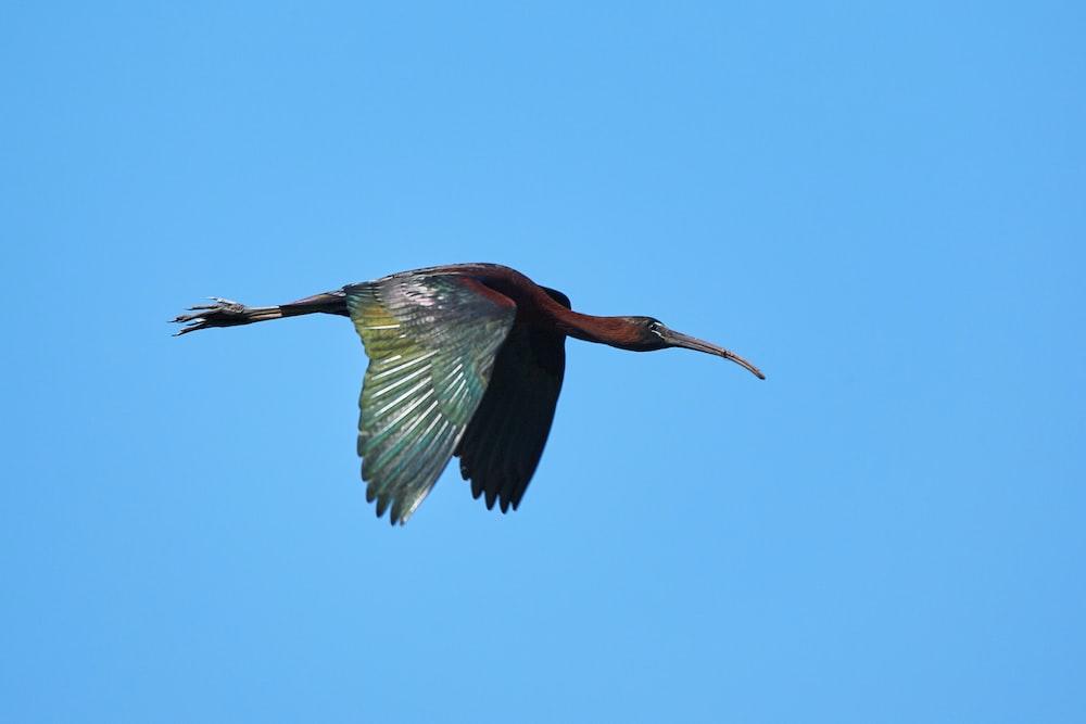 red and green long beak bird flying during daytime