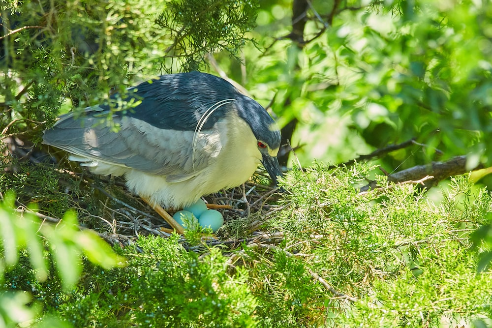 blue and white bird on green grass during daytime