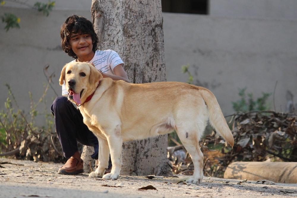 yellow labrador retriever sitting on ground