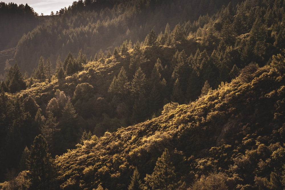 green and brown trees on mountain during daytime
